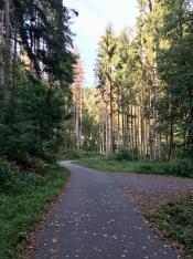 Fietswegen in het bos.