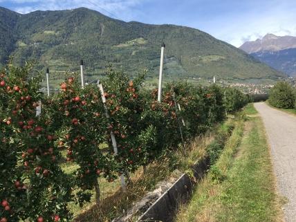 Veel appels in Noord-Italië.