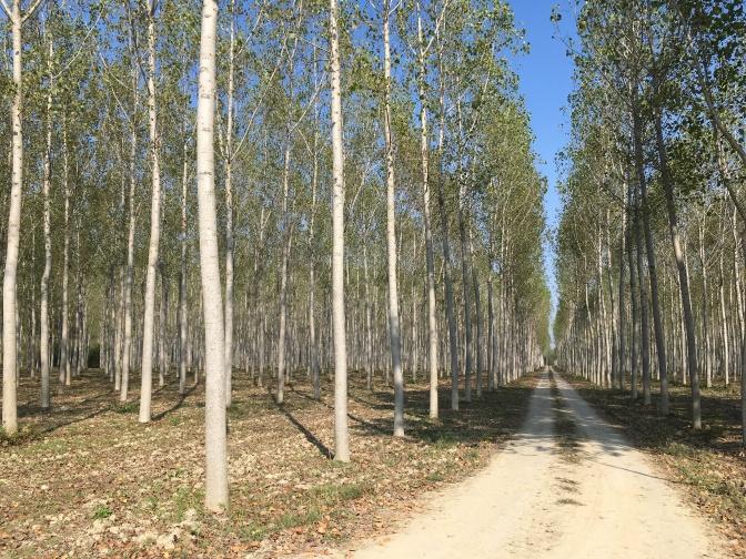 Gravelweg tussen de aangeplante bomen.