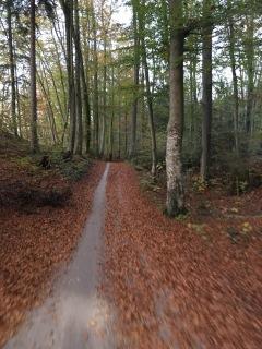 Door het bos langs de rivier richting München.