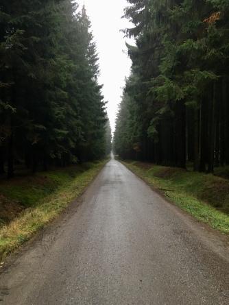 Bosweg in Tsjechië.