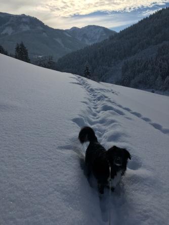 Kamilo in de sneeuw.