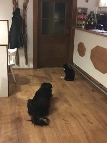 Hund und Katze.