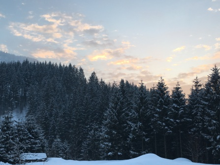 Sneeuw en bomen (23/01).