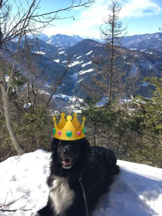 König Kamilo.