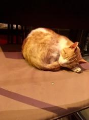 Katten zijn hier overal op hun gemak.