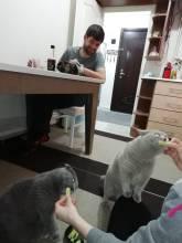 Komkommer etende katten in Eskisehir.