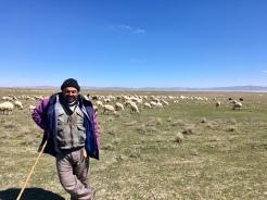 Groetende schapenherder.