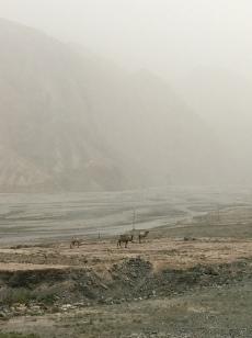 Nog meer kamelen!