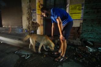 Brave straathonden.