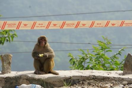 Nog een aap.