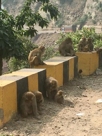 De eerste apen tijdens deze reis!