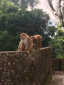 Meer apen.
