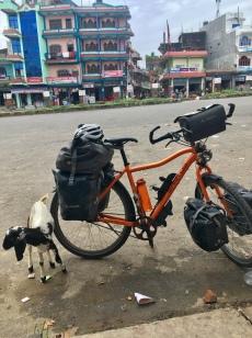Nepalese geit en tractor.