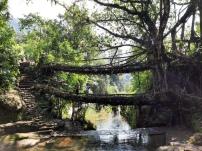 Double decker root bridge.
