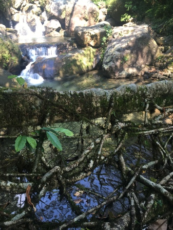 Root bridge.