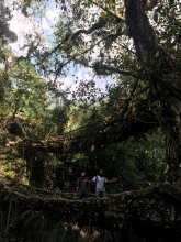 Double decker root bridge.