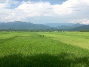 Nog meer rijstvelden en heuvels.