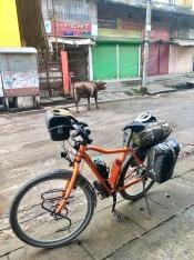 Tractor en koe in Silchar.