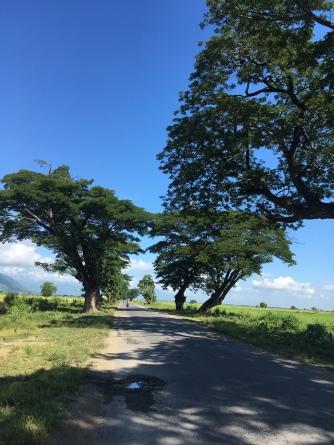 Bomen bieden vaak schaduw in Myanmar.