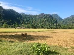 Landschap rond Hpa-An.