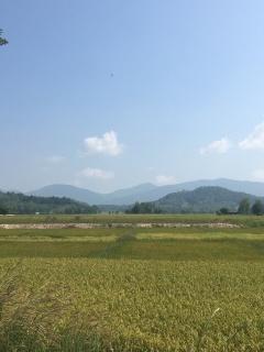 Thaise rijstvelden.