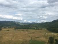 Rijstvelden in Laos.