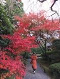 Japanse tuin.
