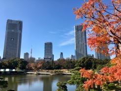 Mooie parken met herfstkleuren in Tokio.